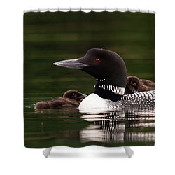 Loon Chicks Shower Curtain