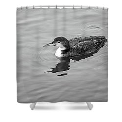 Shower Curtain featuring the photograph Loon  by Trace Kittrell