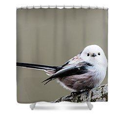 Shower Curtain featuring the photograph Loong Tailed by Torbjorn Swenelius