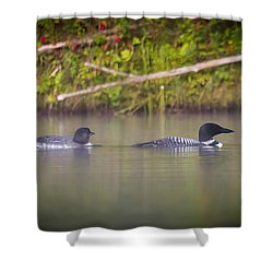 Loons 1 Shower Curtain