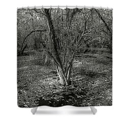Loop Road Swamp #3 Shower Curtain