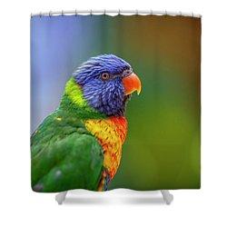 Lorikeet 2 Shower Curtain