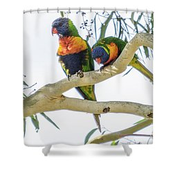 Shower Curtain featuring the photograph Lorrikeets 01 by Werner Padarin
