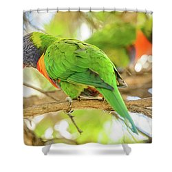 Lorrikeets 02 Shower Curtain