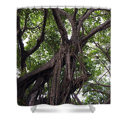 Lost In The Branches Shower Curtain