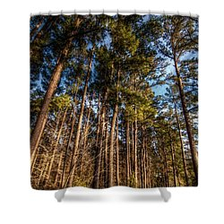 Lost In The Woods Shower Curtain by Linda Unger