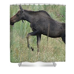 Lost Moose On The Loose In Evergreen Colorado Shower Curtain