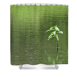 Lost Shower Curtain by Rosalie Scanlon