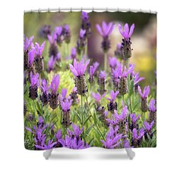 Shower Curtain featuring the photograph Lots Of Lavender  by Saija Lehtonen