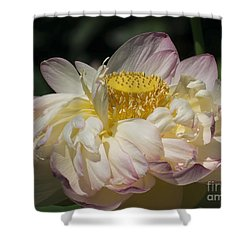 Lotus 2015 Shower Curtain