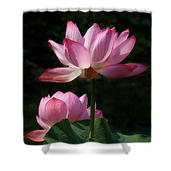 Lotus Beauties--upstaged Dl048 Shower Curtain