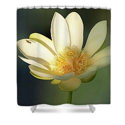 Lotus Beauty Shower Curtain