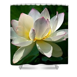 Lotus Beauty--disheveled Dl061 Shower Curtain