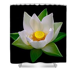 Lotus Blooming Shower Curtain