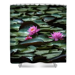 Shower Curtain featuring the photograph Lotus by Brenda Bostic