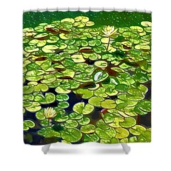 Lotus Flower Born In Water  Shower Curtain by Lanjee Chee