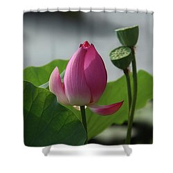 Lotus Flower In Pure Magenta Shower Curtain