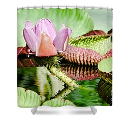 Lotus Flower In Water Shower Curtain