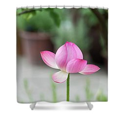 Shower Curtain featuring the photograph Lotus Frankly Scarlet by Tim Gainey