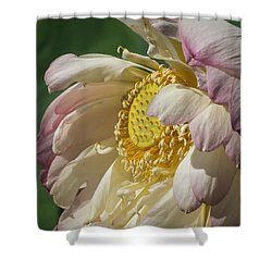 Lotus Glory Shower Curtain