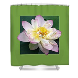 Lotus On Green Shower Curtain by John Lautermilch