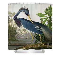 Louisiana Heron Shower Curtain by John James Audubon