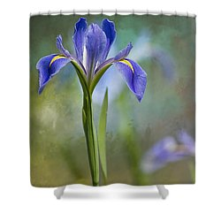 Louisiana Iris Shower Curtain by Bonnie Barry