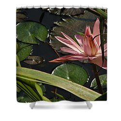 Louisiana Waterlilly Shower Curtain