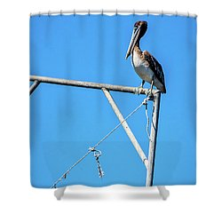 Louisiana's State Bird Shower Curtain by Andy Crawford