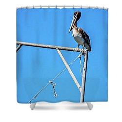Louisiana's State Bird Shower Curtain