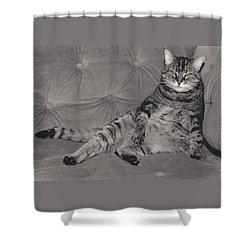 Lounge Cat Shower Curtain by Joy McKenzie
