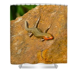 Lounging Lizard Shower Curtain