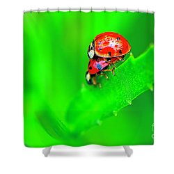 Shower Curtain featuring the photograph Love Bugs by Sharon Talson