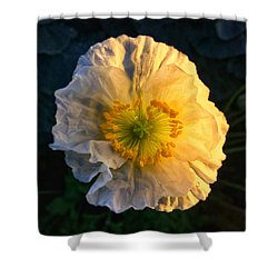 Love In The Morning Shower Curtain