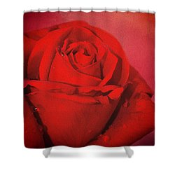 Shower Curtain featuring the photograph Love Is A Red Rose With Raindrops by Diane Schuster