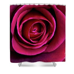 Shower Curtain featuring the photograph Love Is A Rose by Linda Lees