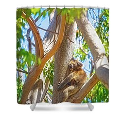 Love My Tree, Yanchep National Park Shower Curtain by Dave Catley