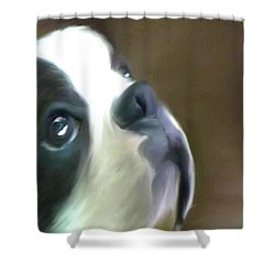 Shower Curtain featuring the painting Love Of A Boston by Maria Urso