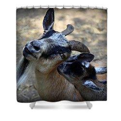 Love On A Farm Shower Curtain by Karen Wiles