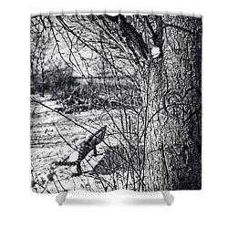 Love On A Tree Shower Curtain by CJ Schmit