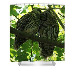 Love Owls Shower Curtain