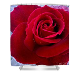 Shower Curtain featuring the photograph Love Red Rose by Haleh Mahbod