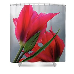 Love Shower Curtain by Rona Black