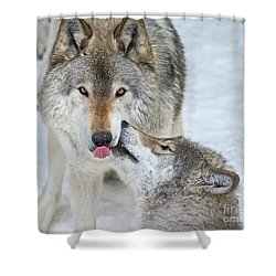 Shower Curtain featuring the photograph Love You Dad.. by Nina Stavlund