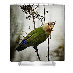 Lovebird  Shower Curtain by Saija  Lehtonen