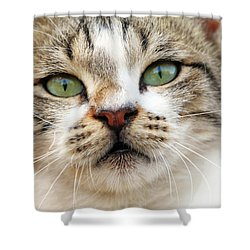 Shower Curtain featuring the photograph Loved by Munir Alawi