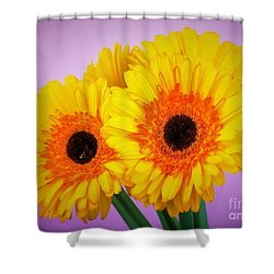 Lovely And Beautiful - Gerbera Daisies Shower Curtain