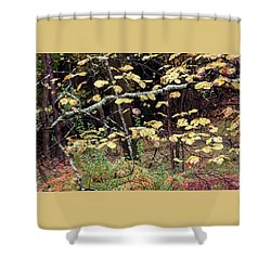Lovely Autumn Witch Hazel -   Shower Curtain