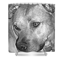 Shower Curtain featuring the drawing Lovely Dog by Lucia Sirna