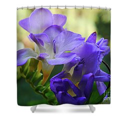 Shower Curtain featuring the photograph Lovely Freesia's by Lance Sheridan-Peel